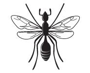 クロアリの羽アリ